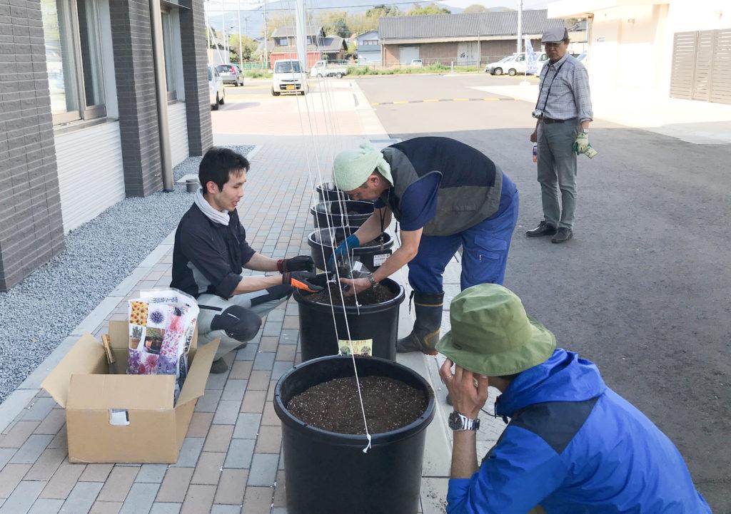 みやき町役場でホップの苗を植え付けている様子